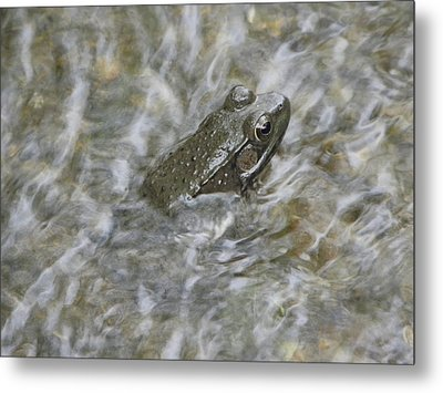 Frog In Rippling Water Metal Print by Cim Paddock