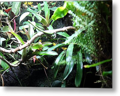 Frog - National Aquarium In Baltimore Md - 12123 Metal Print by DC Photographer