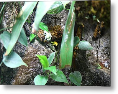 Frog - National Aquarium In Baltimore Md - 12126 Metal Print by DC Photographer