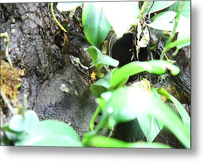 Frog - National Aquarium In Baltimore Md - 12127 Metal Print by DC Photographer