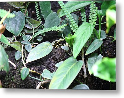 Frog - National Aquarium In Baltimore Md - 12128 Metal Print by DC Photographer
