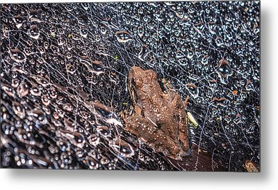 Metal Print featuring the photograph Frog On A Web by Rob Sellers