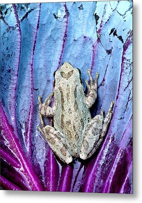 Frog On Cabbage Metal Print by Jean Noren