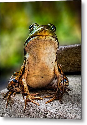 Frog Prince Or So He Thinks Metal Print