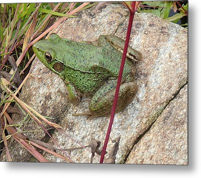 Metal Print featuring the photograph Frog by Robert Nickologianis