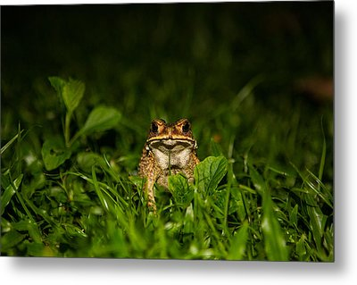 Frog Stare Metal Print by Mike Lee