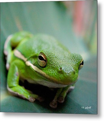 Froggy Smile Squared Metal Print by TK Goforth