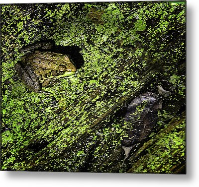 Frogs In Bear Creek Metal Print by LeeAnn McLaneGoetz McLaneGoetzStudioLLCcom