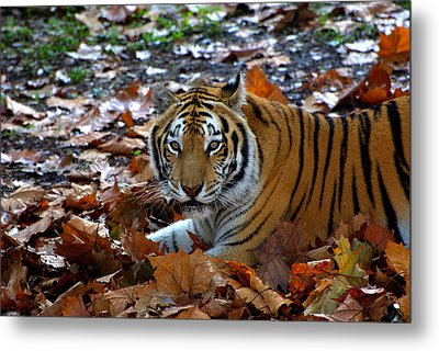 Frolicking In The Leaves Metal Print