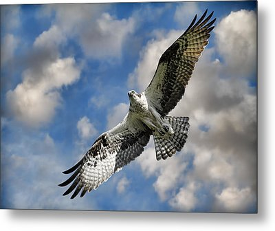From The Clouds Metal Print by Steve McKinzie