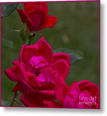 From The Heart Metal Print by Timothy J Berndt