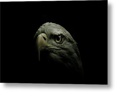 From The Shadows Metal Print by Shane Holsclaw