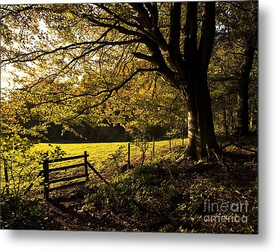 From Woods To Fields Metal Print by Anne Gilbert