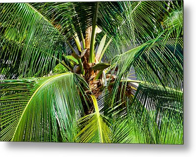 Fronds And Center Metal Print