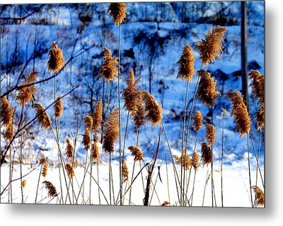 Fronds In Winter Metal Print by Eleanor Abramson