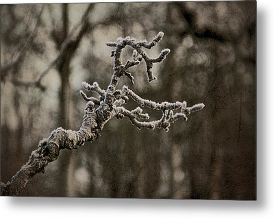 Frost Dragon Metal Print by Odd Jeppesen