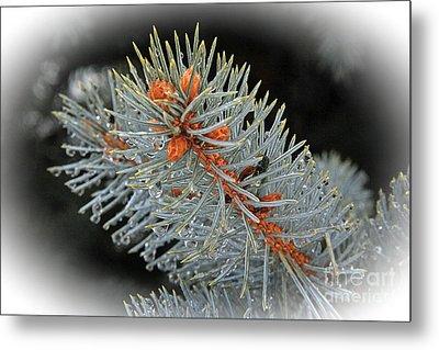 Frost Drops Metal Print by Bob Hislop