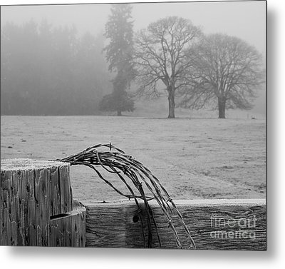 Frost On The Fence Post Metal Print
