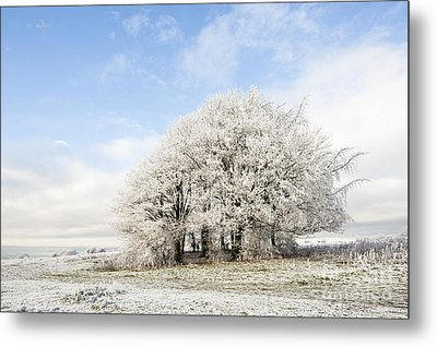 Frosted Copse Metal Print by Anne Gilbert
