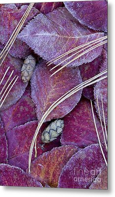 Metal Print featuring the photograph Frosted Leaves by Alan L Graham