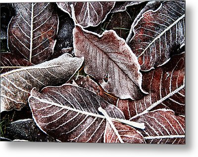 Frosted Leaves Metal Print by John Bushnell