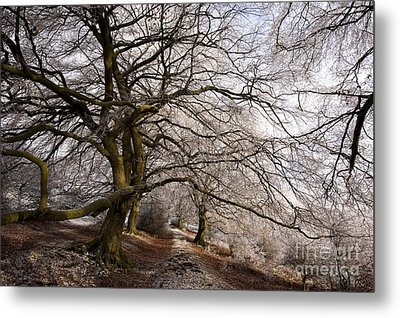 Frosted Path Metal Print by Anne Gilbert