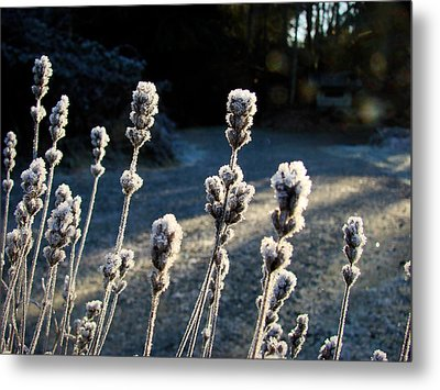 Frosted Metal Print by Ronda Broatch