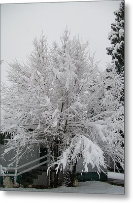 Frosted Tree Metal Print by Jewel Hengen