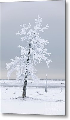 Frosted Tree Metal Print by Tim Grams