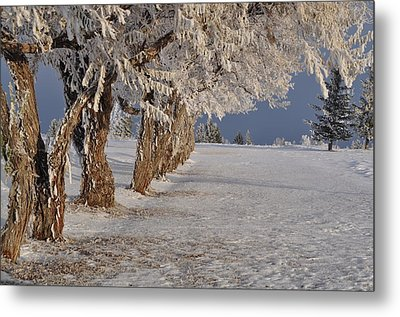 Metal Print featuring the photograph Frosted Trees by Fran Riley