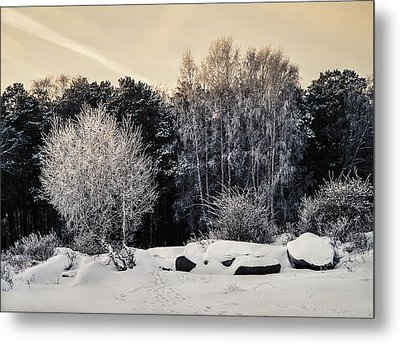 Frosted Trees Metal Print by Vladimir Kholostykh