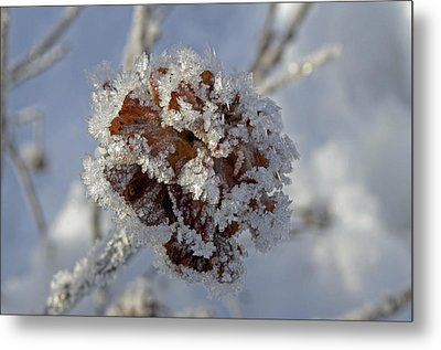 Frosted Willow Rose Metal Print by Cathy Mahnke