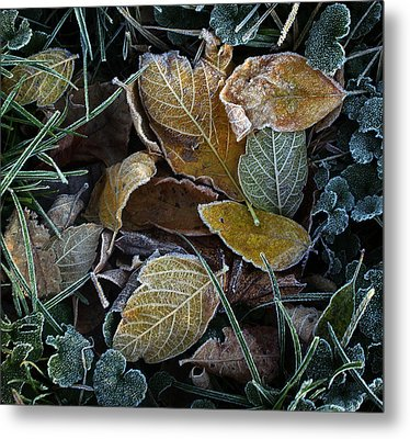 Frosty Autumn Leaves Metal Print by Ellen Tully