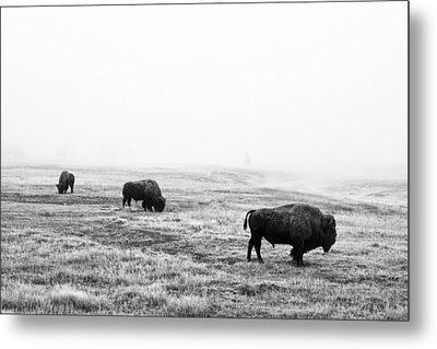Frosty Bison Metal Print by Mark Kiver