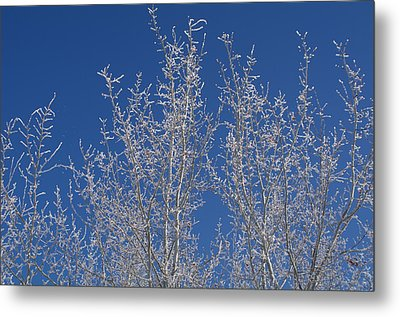 Metal Print featuring the photograph Frosty Blue Sky by Sheila Byers