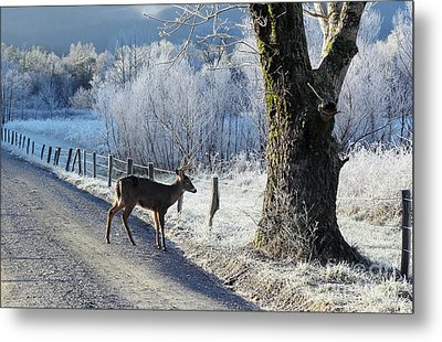 Frosty Cades Cove II Metal Print