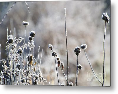 Frosty Flowers Metal Print