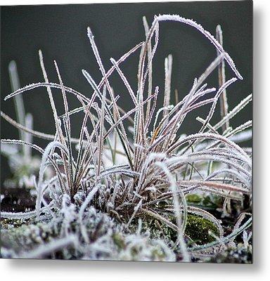 Frosty Grass Metal Print by Karen Grist