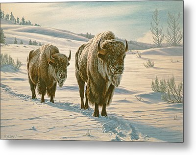 Frosty Morning - Buffalo Metal Print
