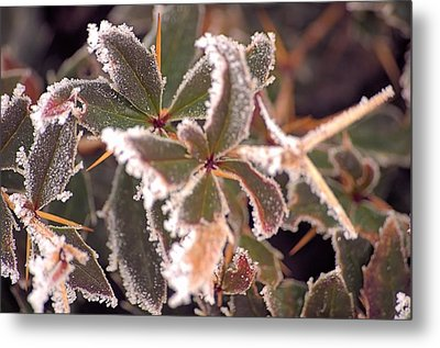 Frosty Morning Metal Print by Dave Woodbridge