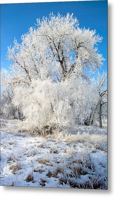 Frosty Morning Metal Print by Shane Bechler