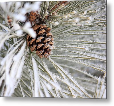 Frosty Norway Pine Metal Print by Penny Meyers