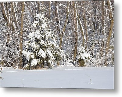 Metal Print featuring the photograph Frosty Pine by Dacia Doroff