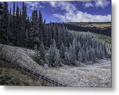 Frosty Pines Metal Print by Tom Wilbert