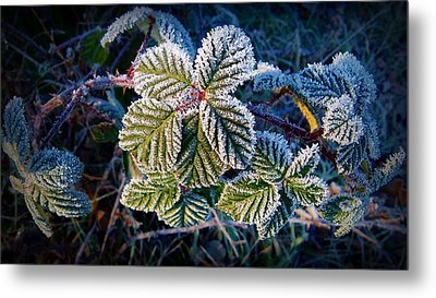 Metal Print featuring the photograph Frosty Ten Degrees by Julia Hassett