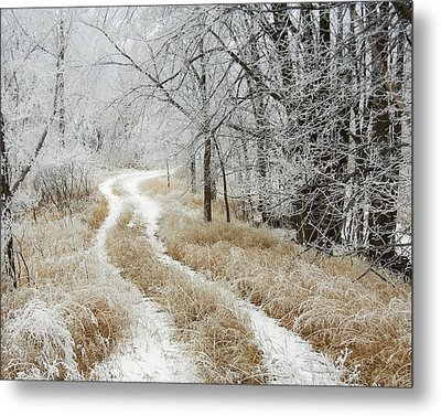 Metal Print featuring the photograph Frosty Trail 2 by Penny Meyers