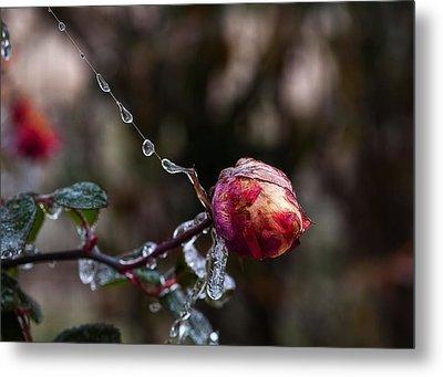 Froze Rose Metal Print by Mark Alder