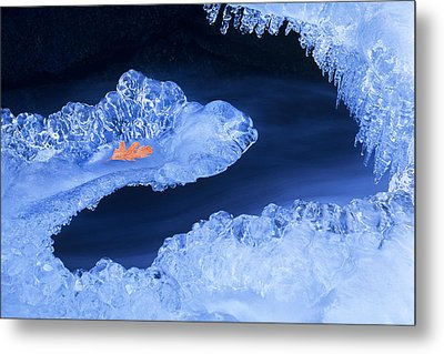 Frozen Beauty Aka Ice Is Nice Metal Print by Bijan Pirnia