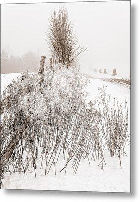 Frozen Fog On A Hedgerow - Bw Metal Print