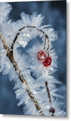 Frozen Food Metal Print